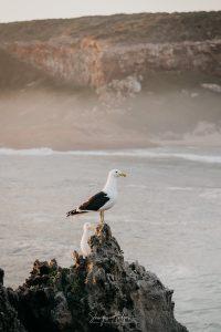 Melanie & Berno's surprise engagement on Robberg Nature Reserve
